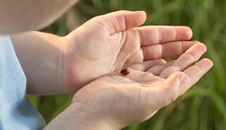 ladybugRelease